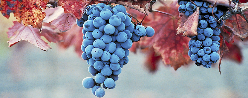 Grapes-poster